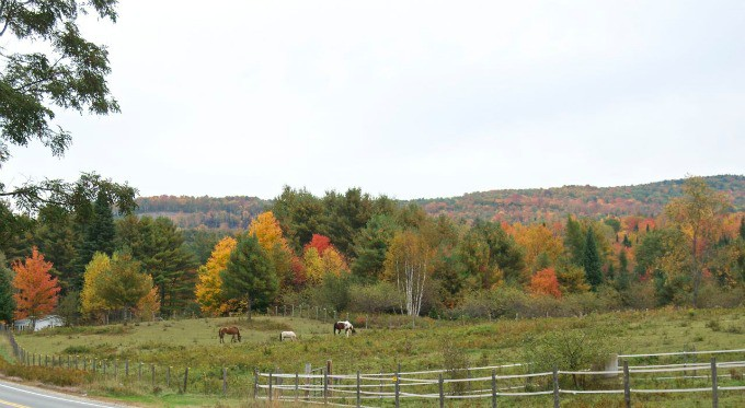 Fall Foliage in New Hampshire 2014