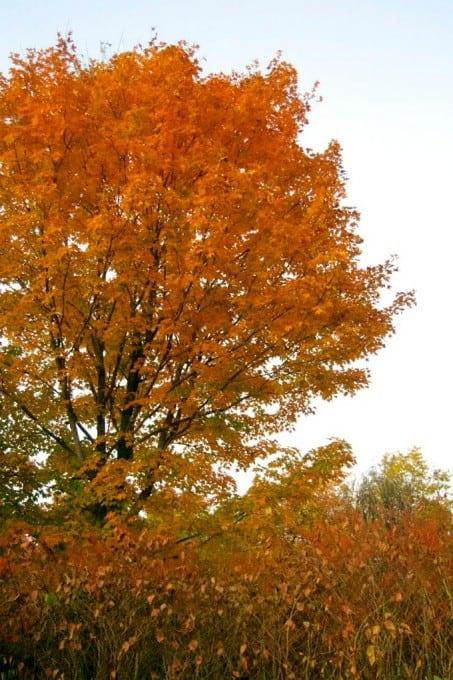 Fall Foliage in New Hampshire 2014