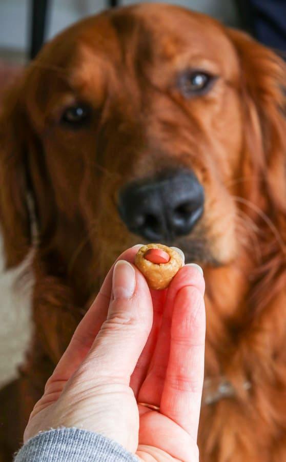 Logan the Golden Dog and a Homemade Dog Pill Pocket