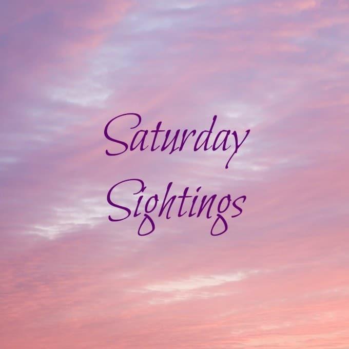 Saturday-Sightings