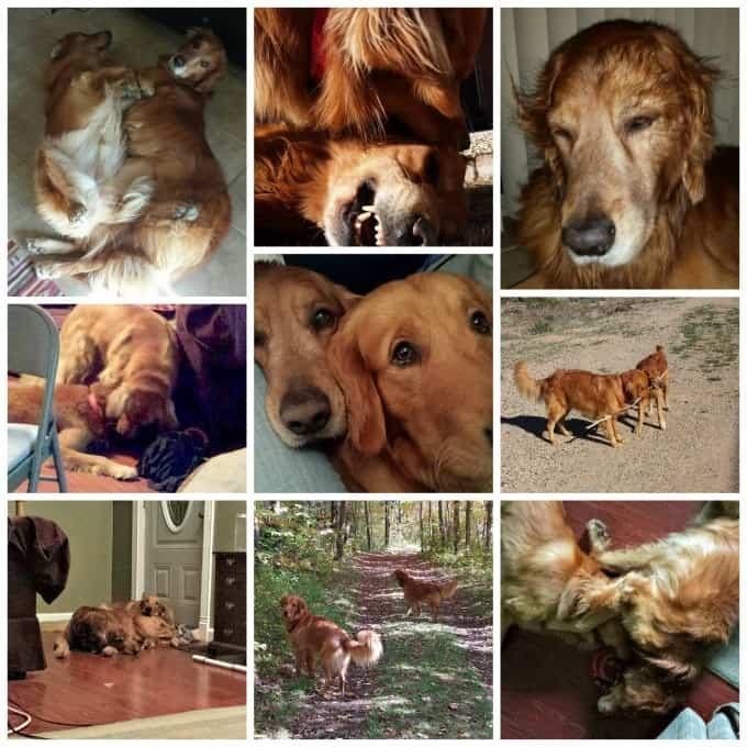 Puppies-Collage