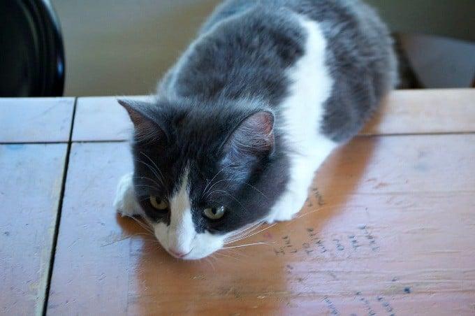 Kitty-Waiting-for-banana-bread