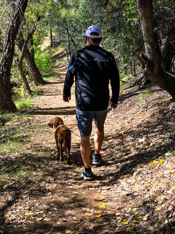 Logan the Golden Dog walking with dad.