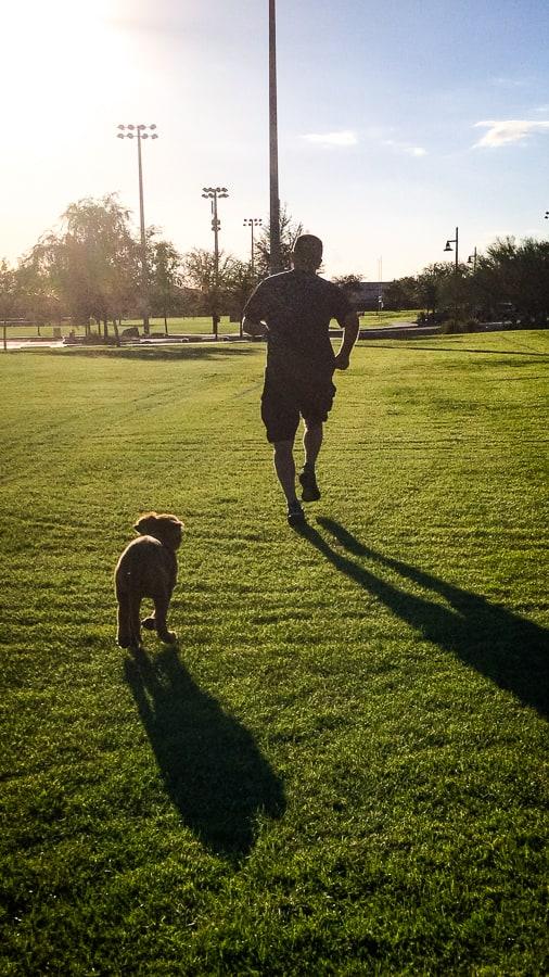 Logan the Golden Dog, a Golden Retriever, running in the park.