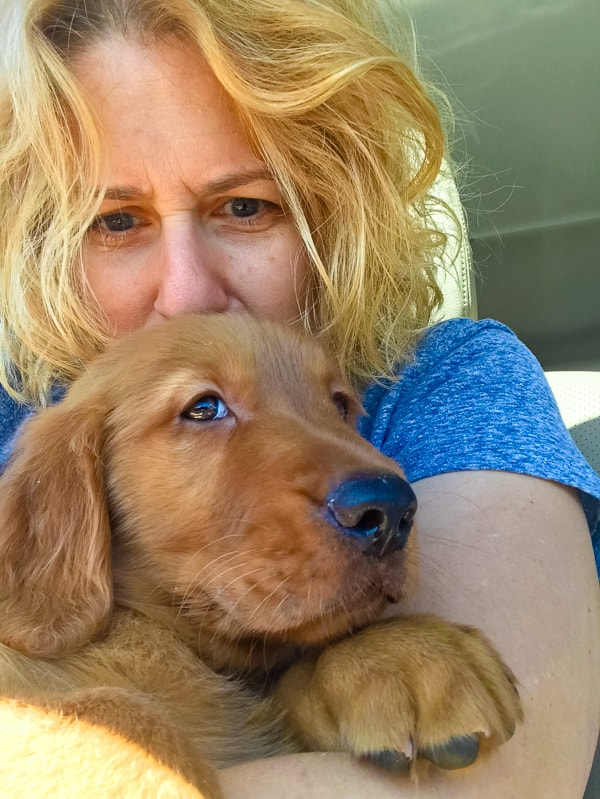 Furry Friend Friday - Logan the Golden Dog being hugged by mommy