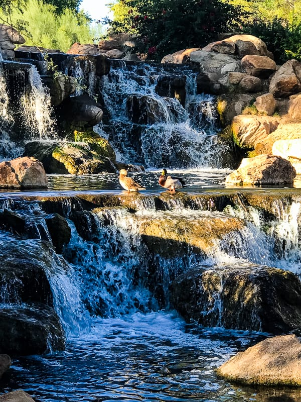 Waterfall in Anthem, AZ.