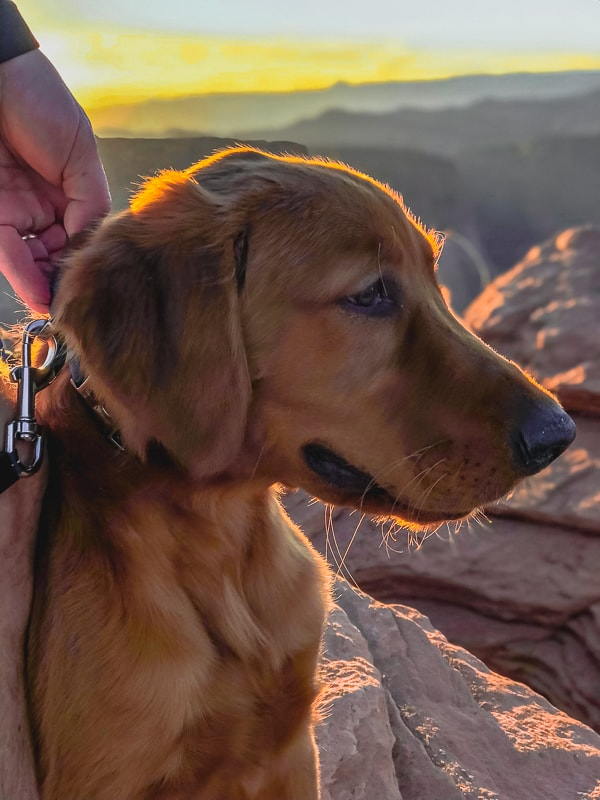 Logan the Golden Dog at Horseshoe Bend.