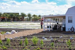 Farmer Erich Schultz looking over his Steadfast Farm, Mesa, AZ.
