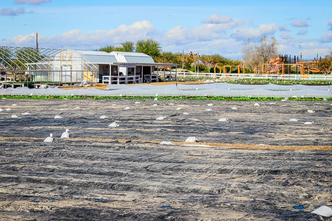 Preparing the fields and the sheds at Steadfast Farm, Mesa, AZ.
