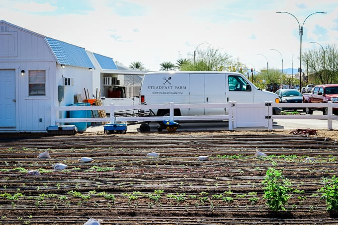 A flower field and delivery trucks at Steadfast Farm, Mesa, AZ.