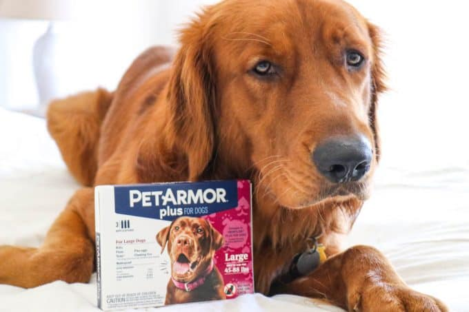 Logan the Golden Dog with his box of PetArmor Plus.